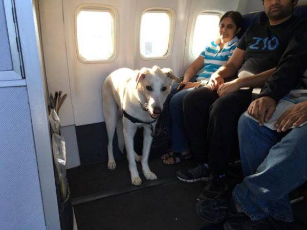 Animali in aereo con le famiglie per fuggire dall'incendio