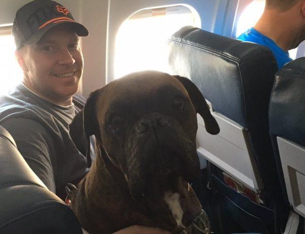 Aereo Privato Cani : Cani che prendono il volo foto tutto zampe
