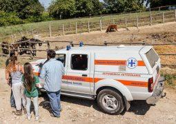 Terremoto in tempo reale, sos animali nelle campagne