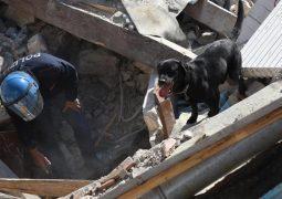Terremoto in tempo reale, il labrador Leo salva una bimba
