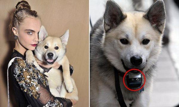 Leo e il collare al pepe, vita da cane di topmodel