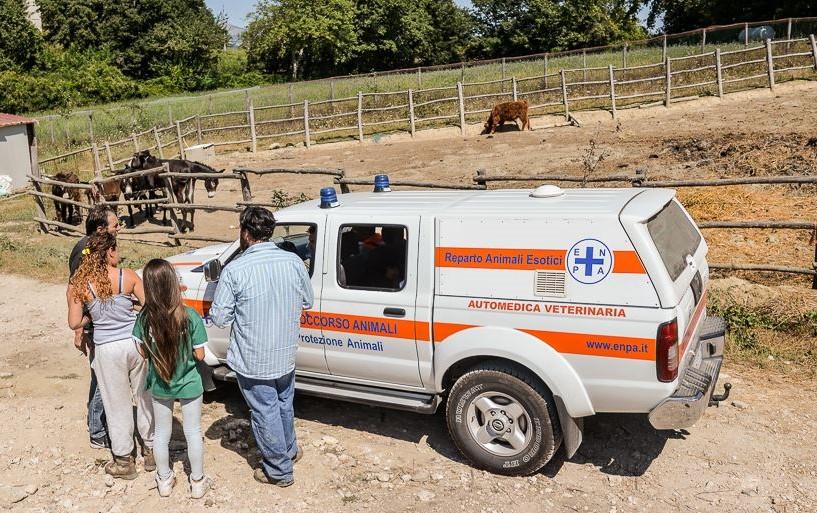 ambulanza-veterinaria-enpa-in-campagna