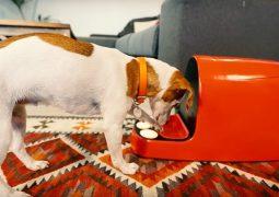 Cani, Bautiful box è la 1 console per il loro gioco (VIDEO)